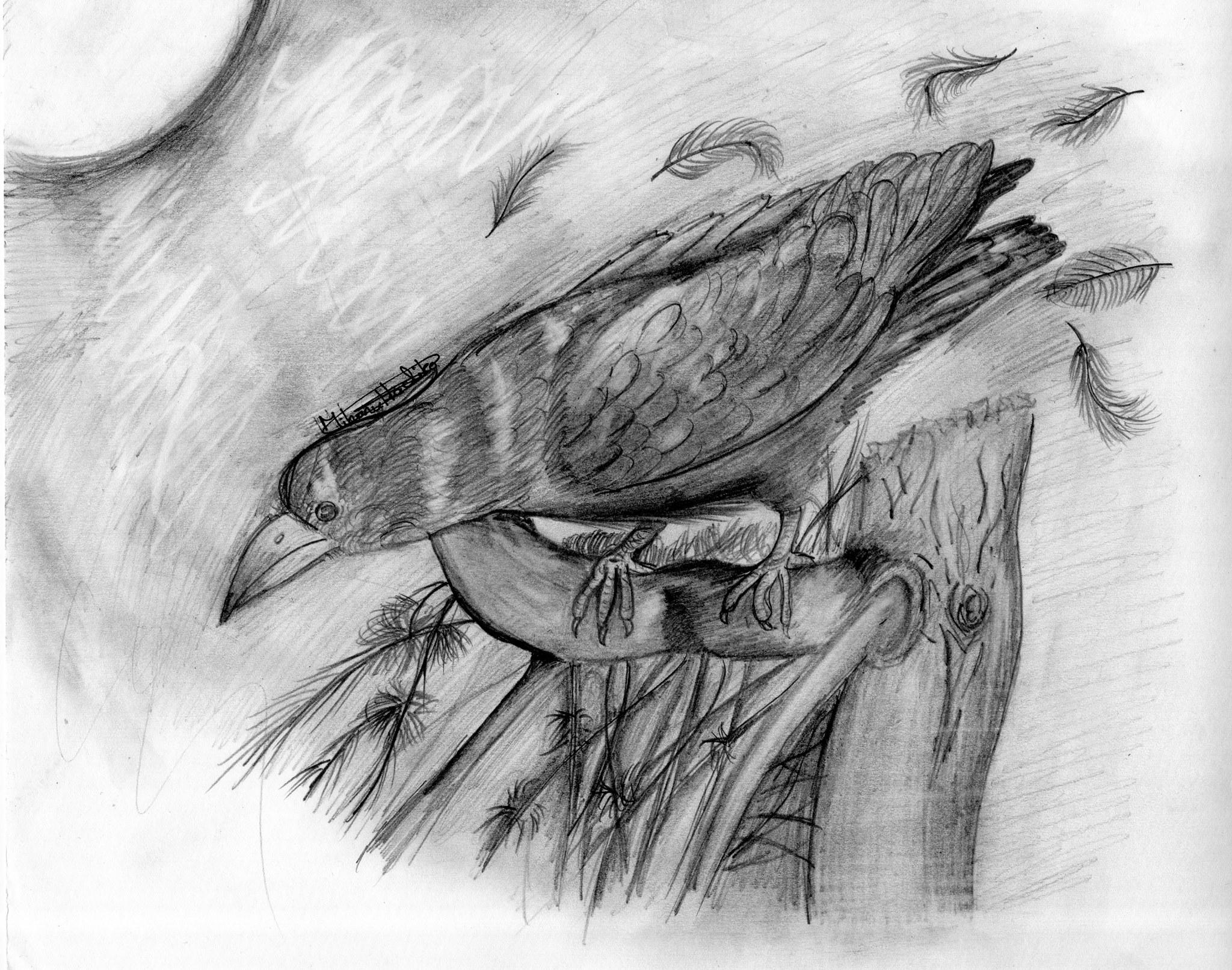 Corbeau noir au crayon par Angélique